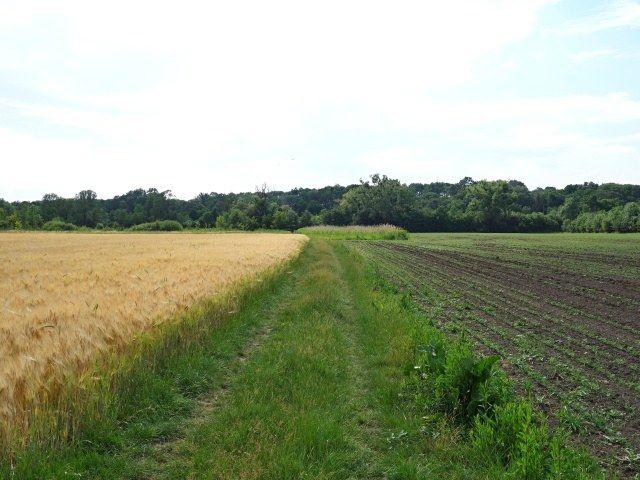 Polní cesta u přední části pozemku