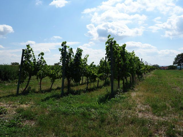 Levá přední část vinohradu