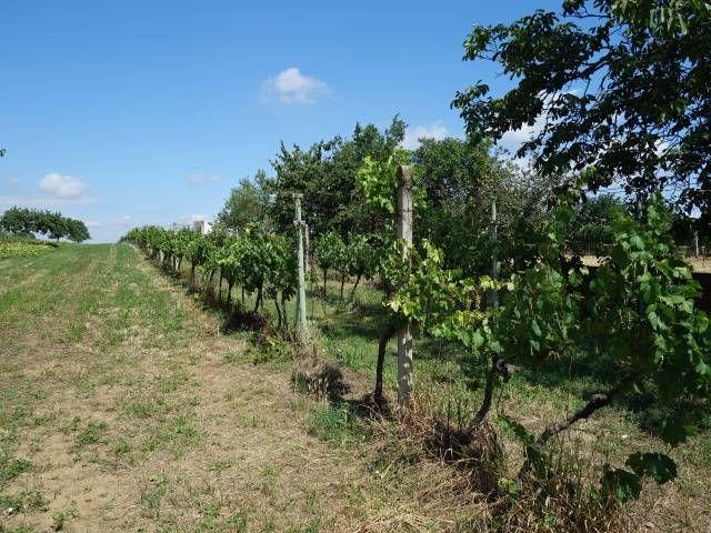 Levá zadní část vinohradu