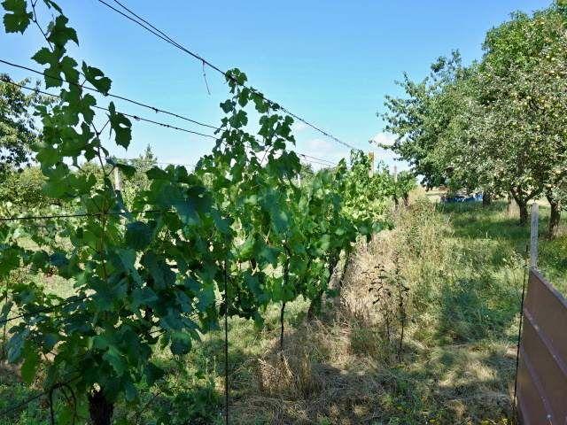 Pravá zadní část vinohradu