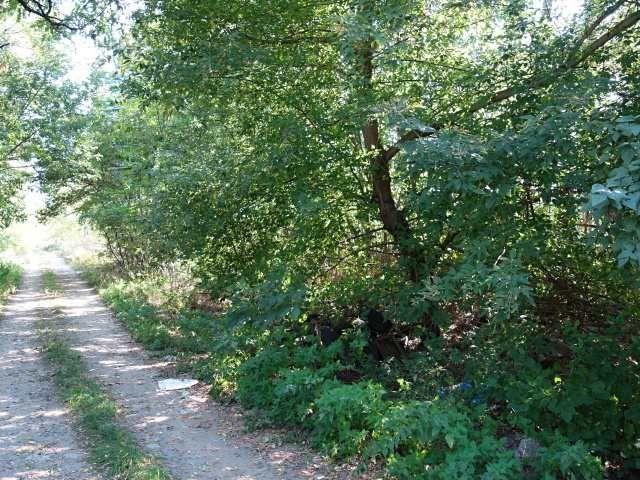 Přední část pozemku a cesta