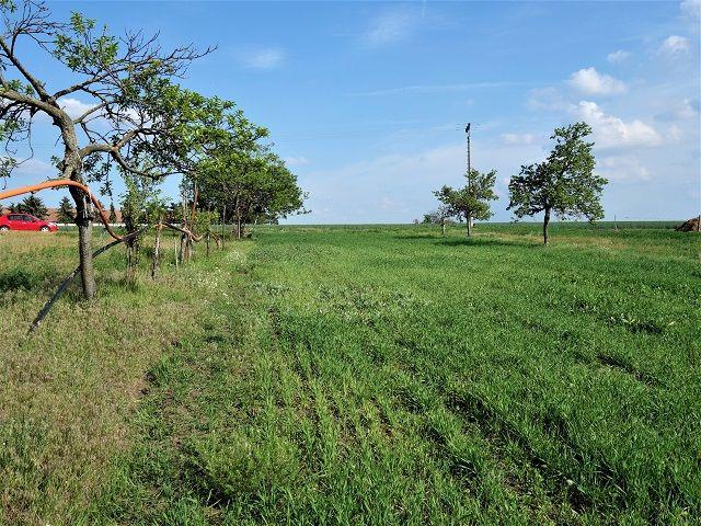 Pravá část pozemku, pohled k cestě