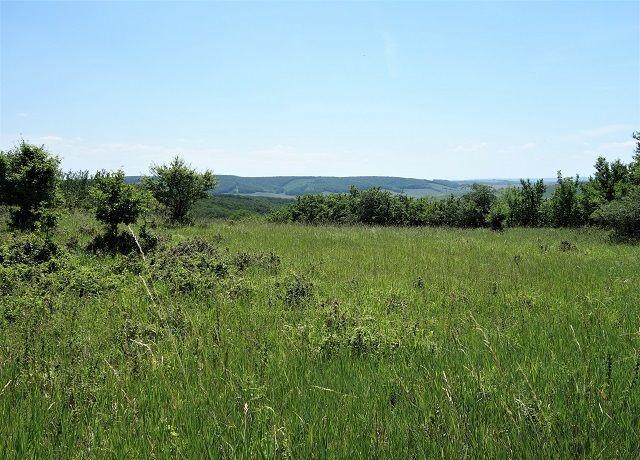 Prodej pozemku 3 734 m² Klobouky u Brna
