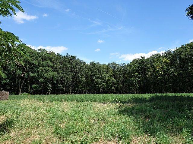 Pohled od rozhledny směrem k lesu
