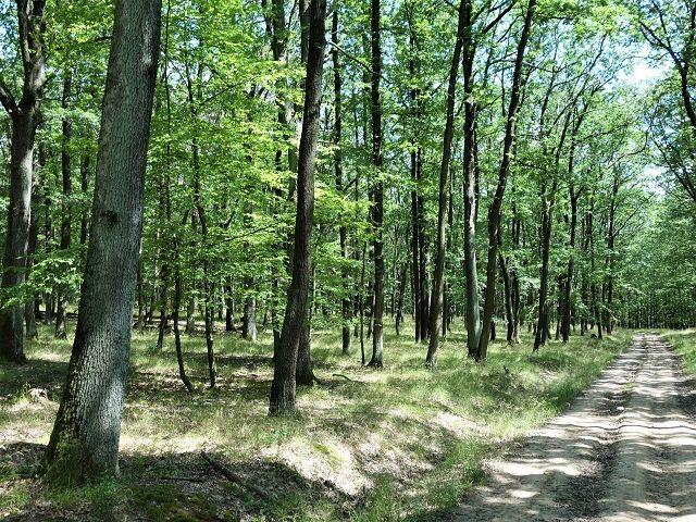 Les na prodej