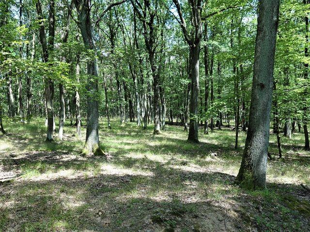 Další část lesa