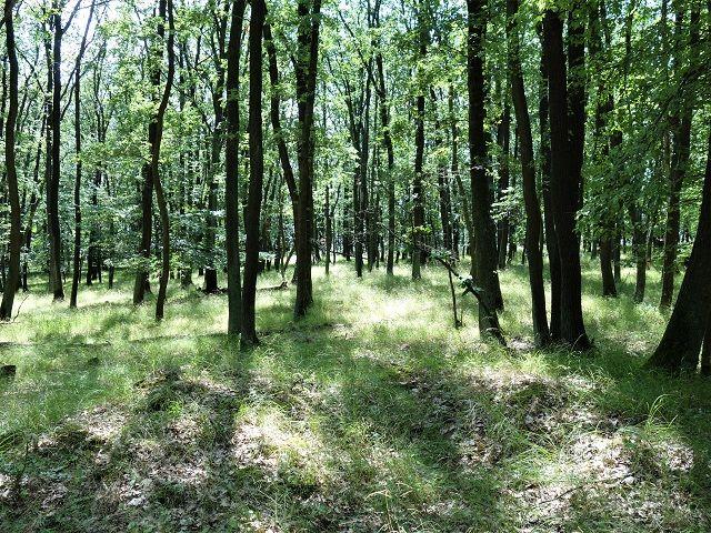 Stromy vypadají zdravě