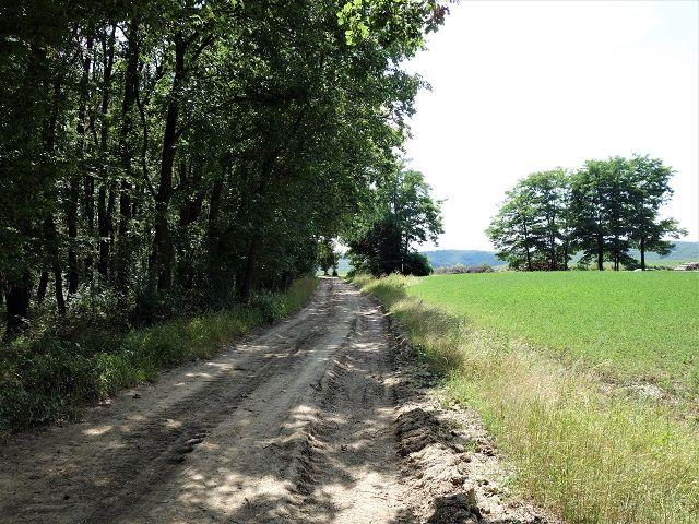 Cesta ven z lesa