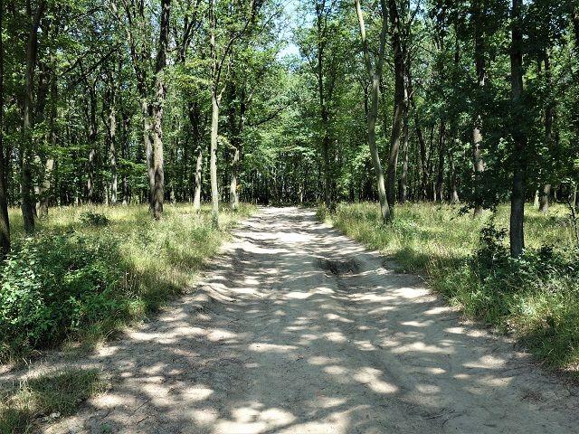 Cesta lesem k pozemku