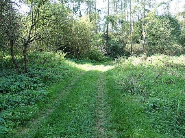 Příjezdová lesní cesta