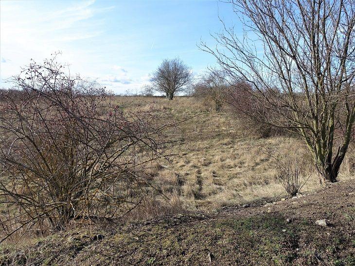 Pohled na přední část pozemku